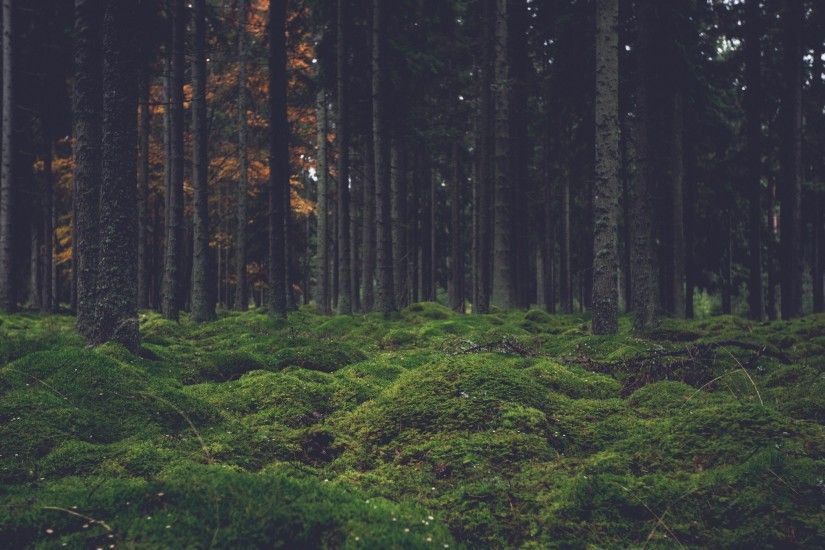 ... Background Mac iMac 27. 2560x1440 Wallpaper moss, trees, forest