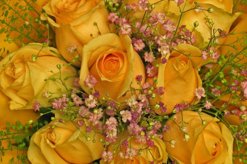 ... gypsophila, affection, background, petals, beautiful, bud, floristry,  congratulate, fragrance, filigree, gardener, valentine's day, yellow roses,  ...