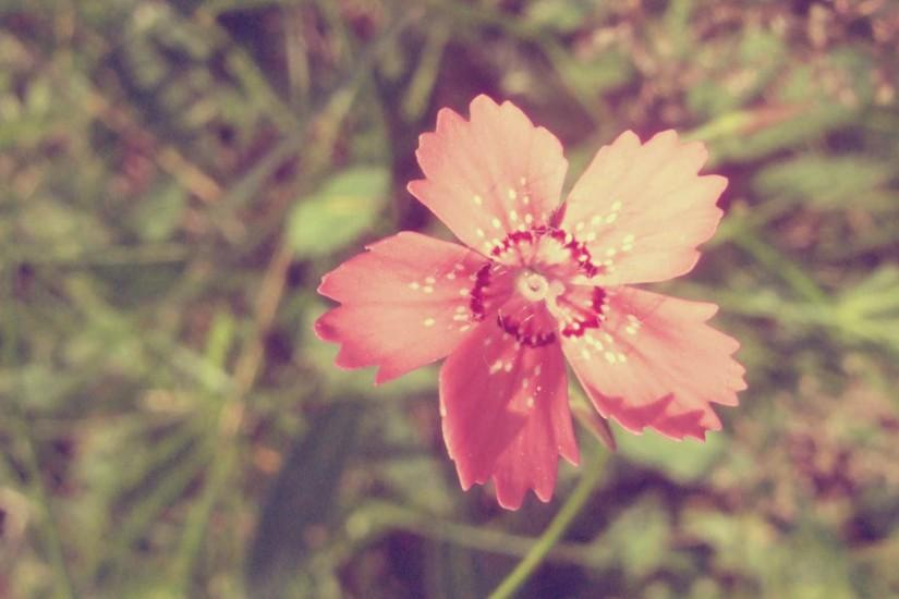 Wallpapers For > Cool Vintage Flower Backgrounds