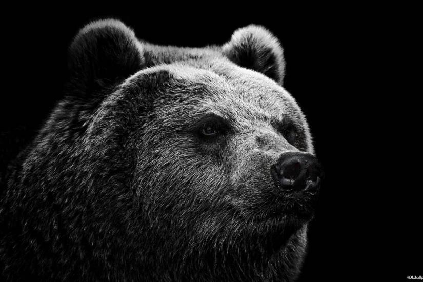 download bear wallpaper 1920x1080 for ipad pro