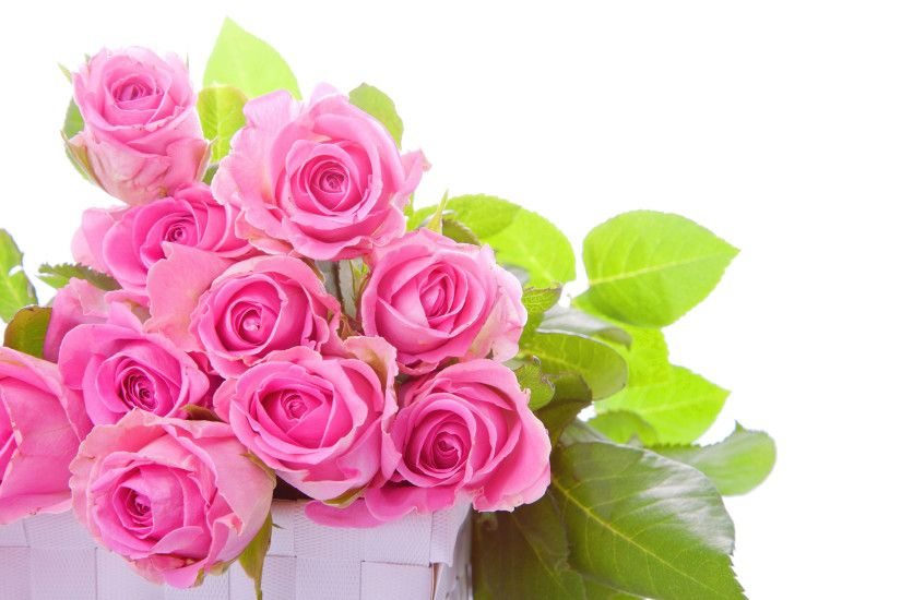 Pink Rose Wallpaper 1607
