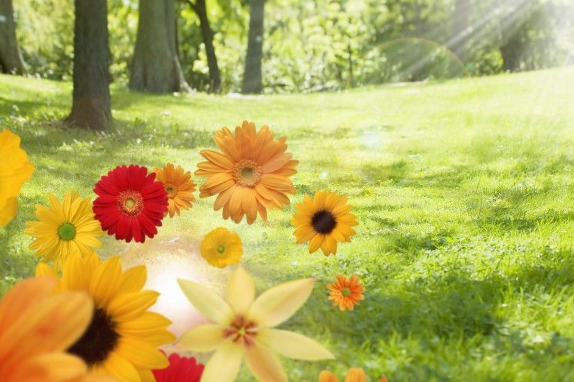 1920x1080 Sunshine summer and color flowers desktop backgrounds wide  wallpapers:1280x800,1440x900,1680x1050