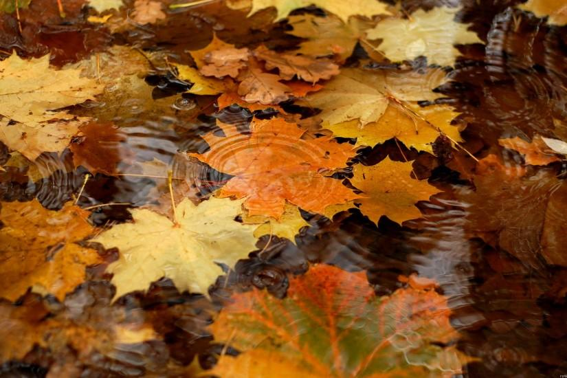 Autumn Free hd wallpapers Page 0 | WallpaperLepi