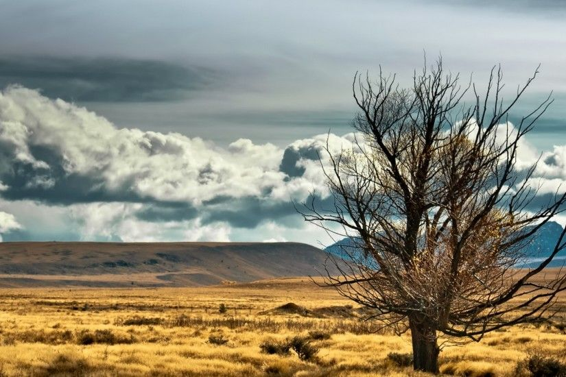Preview wallpaper new zealand, steppe, tree, lonely, field 1920x1080