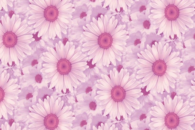 Pink Daisy Background 797667