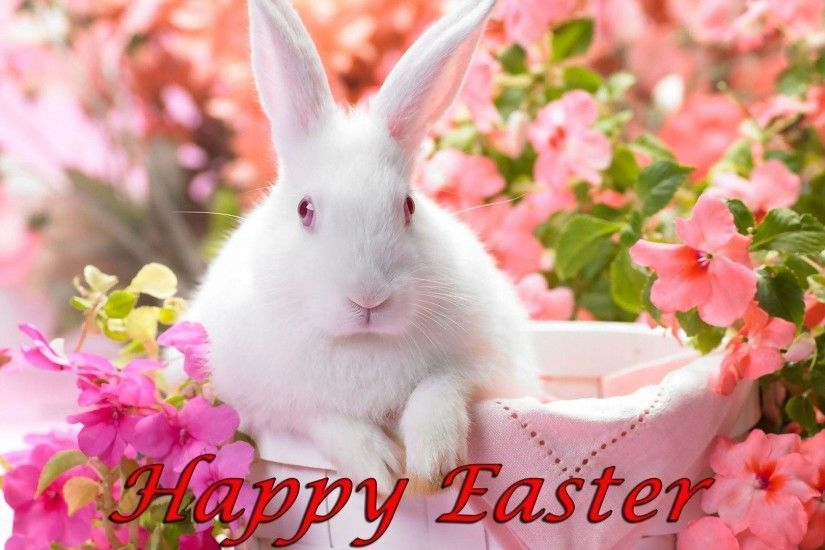 Easter bunny wallpaper - Holiday wallpapers - #