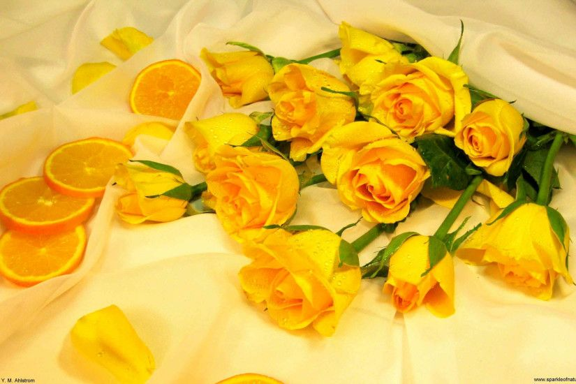 Wallpapers For > Yellow Roses Wallpaper Desktop Background