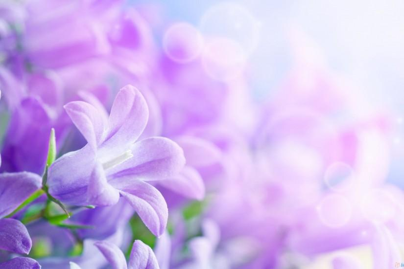 cool flower background 2560x1600 download free