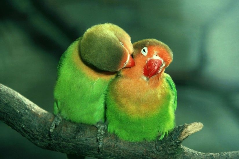 Wallpapers For > Wallpapers Hd Love Birds