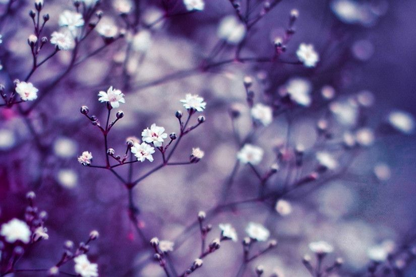 hd pics photos flowers small tiny white desktop background wallpaper