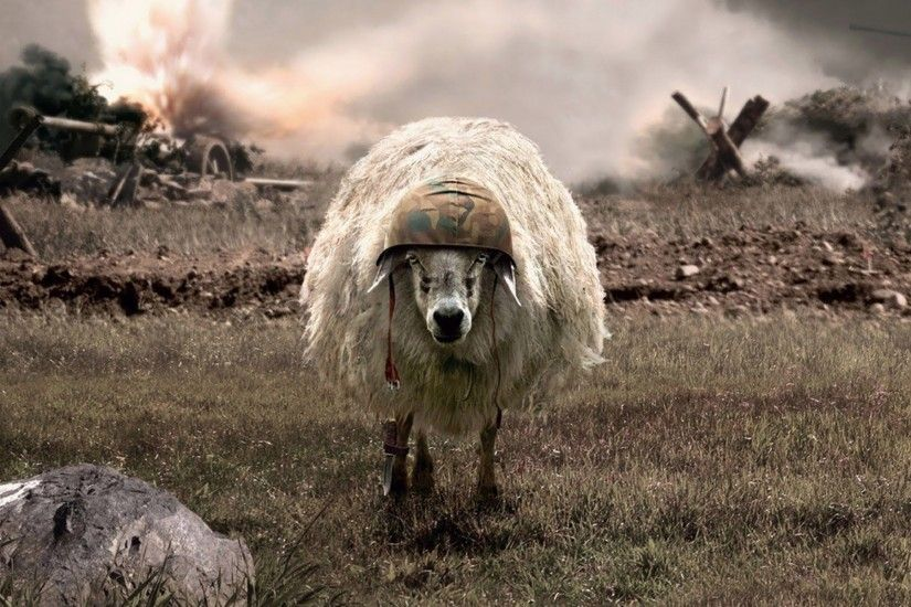 White Sheep Grazing D and CG Abstract Background Wallpapers