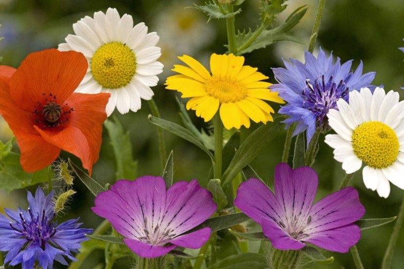 Download Convert View Source. Tagged on : Summer Flowers Wallpaper ...