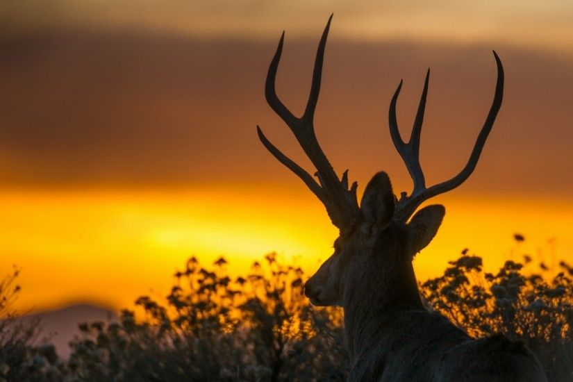 ... sunset deer High Quality Wallpapers,High Definition Wallpapers ...