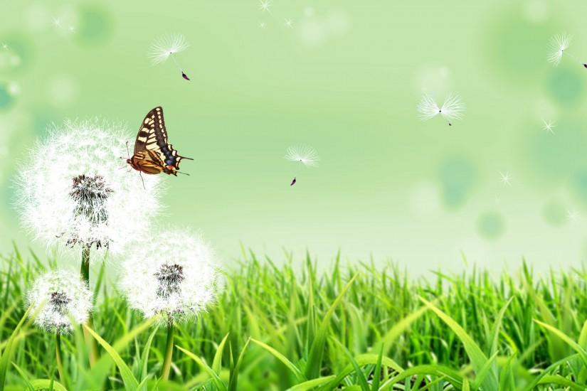 Butterfly Nature Wallpapers | HD Wallpapers