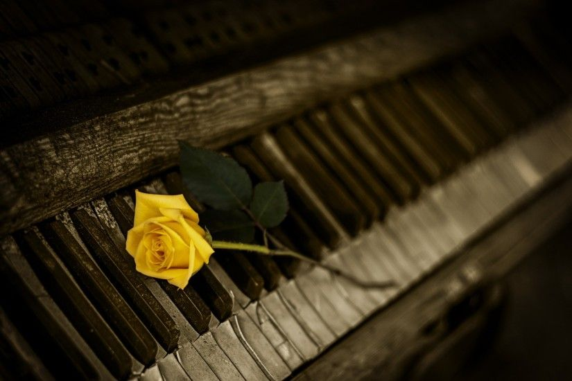 Download now full hd wallpaper yellow rose piano keys blurry background ...