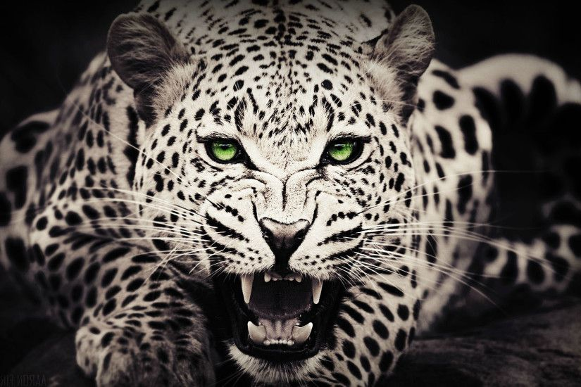 Black Cheetah Wallpapers - Wallpaper Cave Black and white cheetah wallpaper  Group (52 ) ...