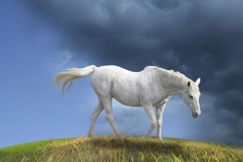 horse wallpaper 1920x1200 for hd 1080p