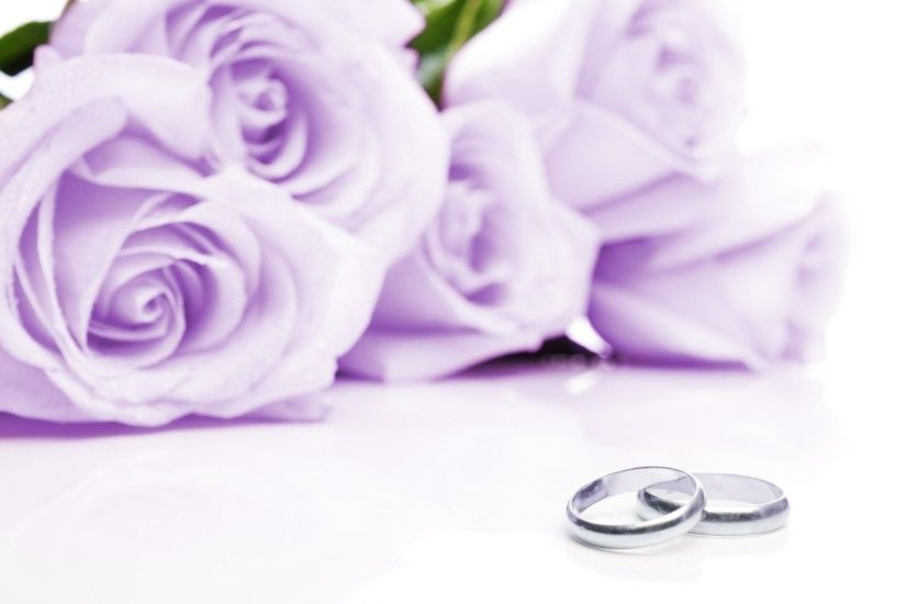 cloth wedding rings flower purple roses cloth wedding rings flowers lilac  roses