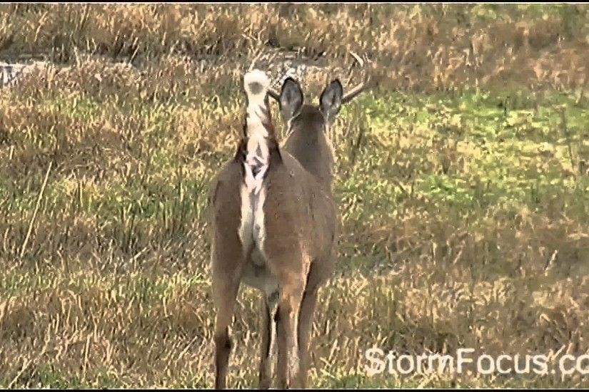 MONSTER Buck Poops (Full ) Video Clip video film footage how to on youtube  ۞۞۞