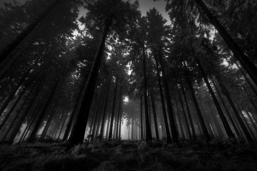 Dark-Woods-Wallpaper