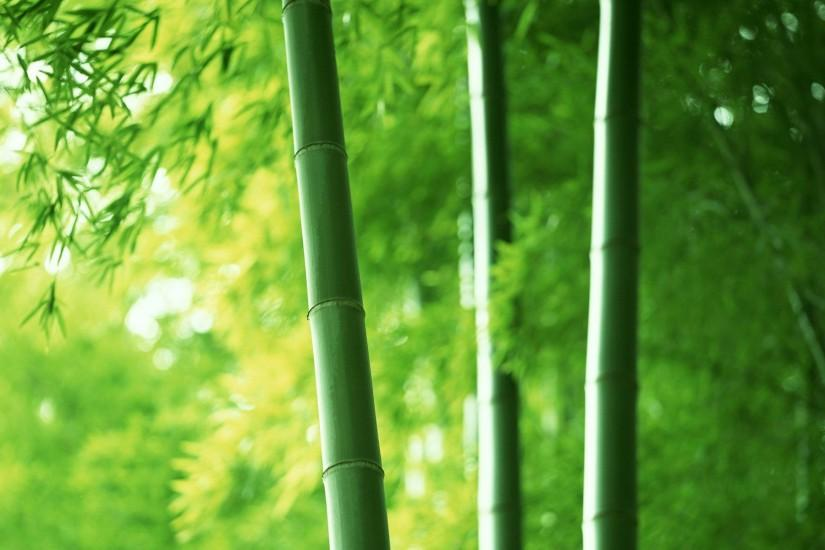 cool bamboo wallpaper 1920x1200 for 1080p