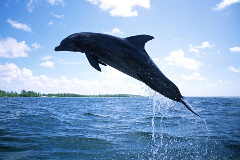 Animal Wallpaper HD - Dolphin Jumping in dimmed light - background picture  for mobile and desktop