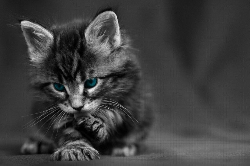 Preview wallpaper cat, black white, blue, eyes, baby, beautiful 2048x1152