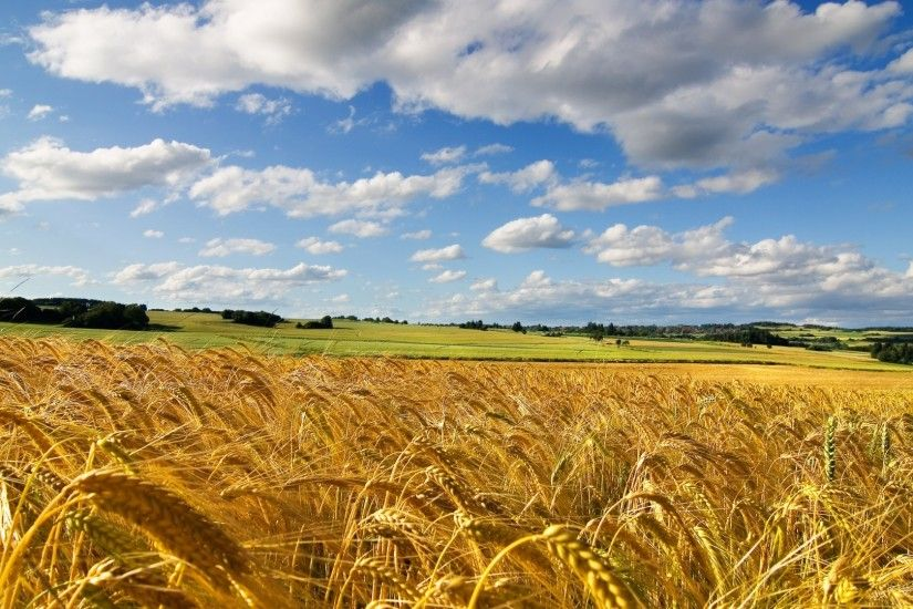 1920x1080 Wallpaper field, ears, wheat, sky, summer, cereals