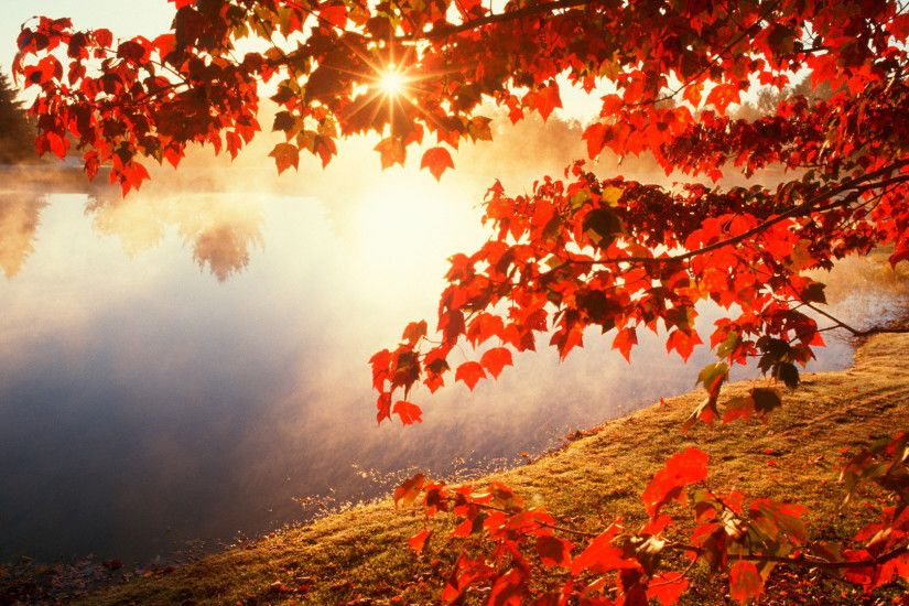 top autumn leaves wallpapers