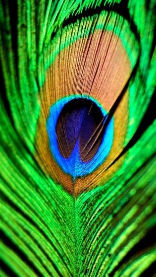 1440x2560 quad hd mobile phone wallpapers 1440x2560 peacock feather