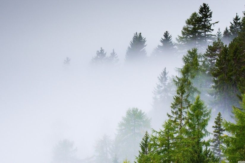 awesome Conifer-Forest-Mist-Rainy-Day-Wallpaper-3840x2160