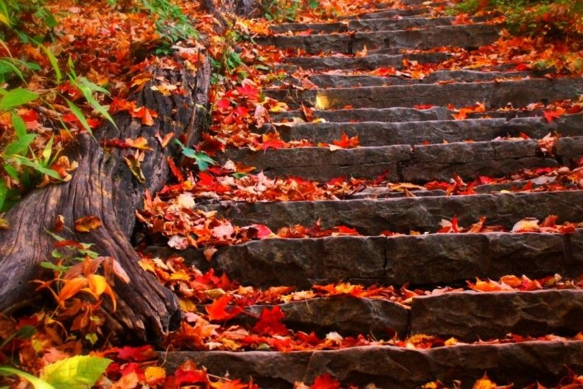 Autumn Leaves Steps Foliage Fall Nature Wallpaper 1920x1080 - 1920x1080