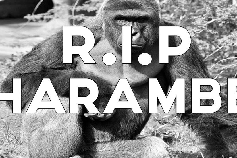 beautiful harambe wallpaper 1920x1080 for windows 7