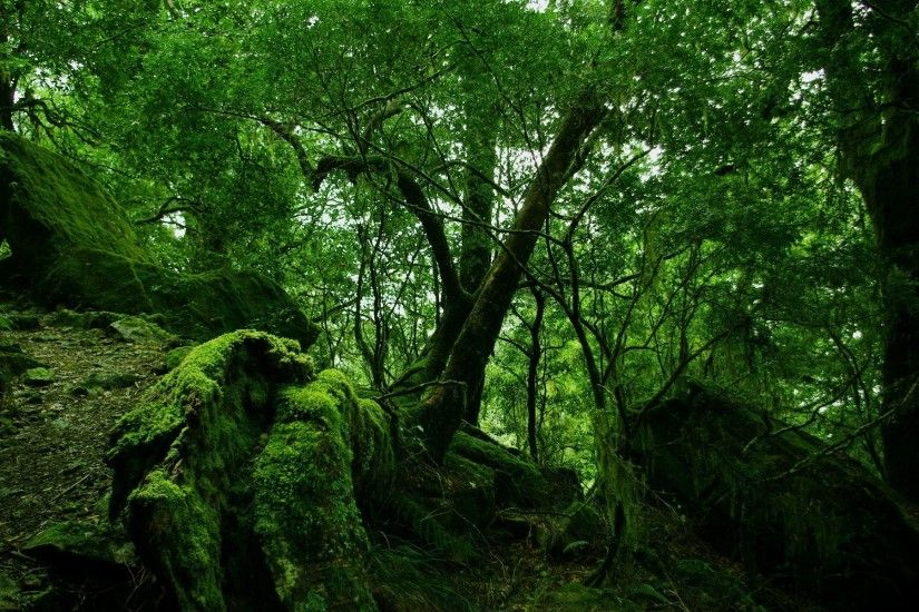 Rain forest wallpapers pictures photos images | ImgStocks.com ...