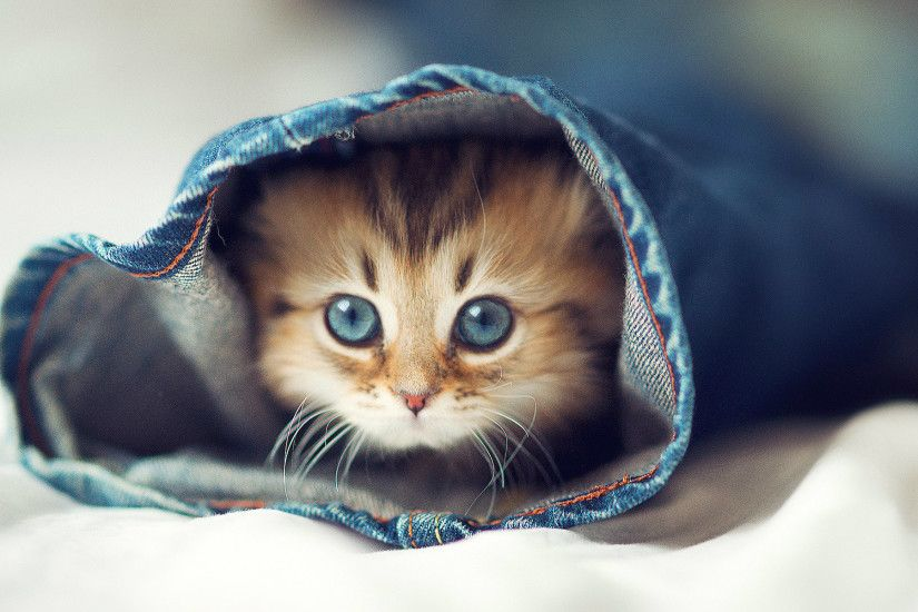 Cute Cat Wallpaper Beautiful Image
