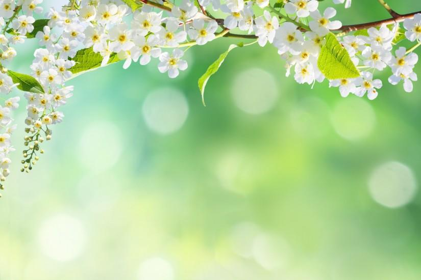 amazing spring background 2888x1956