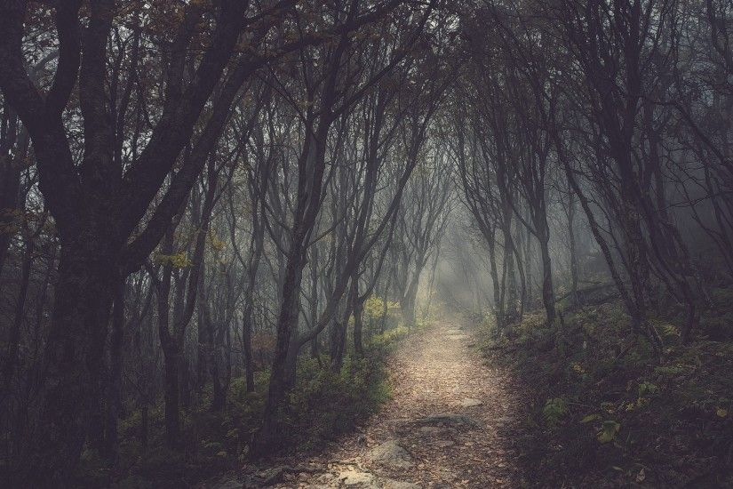 Forest & Small Path wallpapers | Mysterious Forest & Small ...