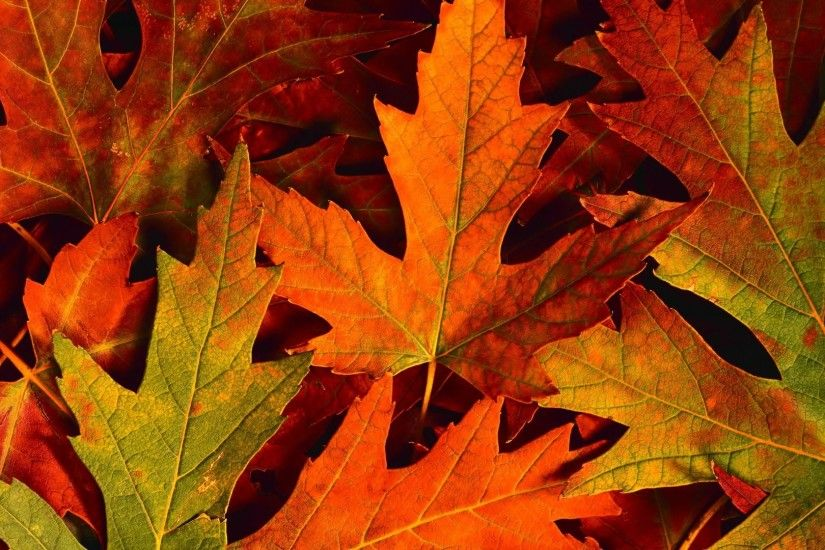 Autumn Nature Leaves Fall Background Pictures