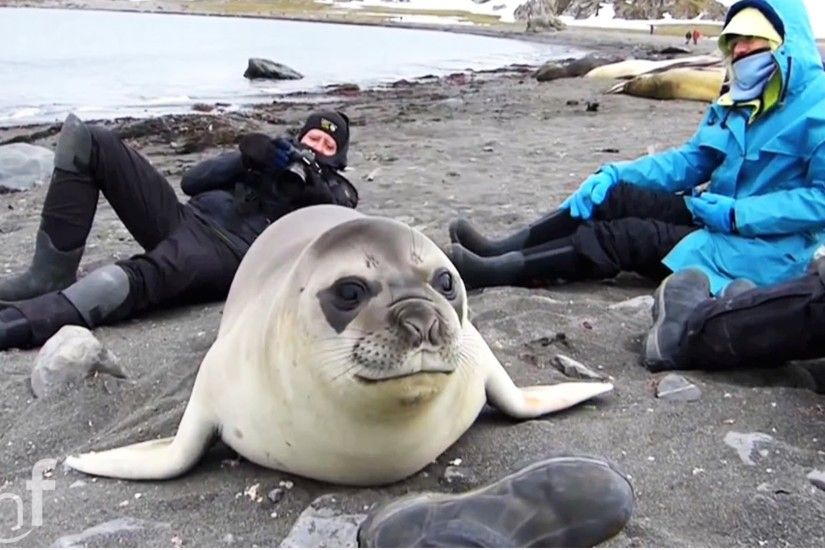 INCREDIBLE Encounter with Friendly Baby Elephant Seal [EXTENDED CUT] -  YouTube