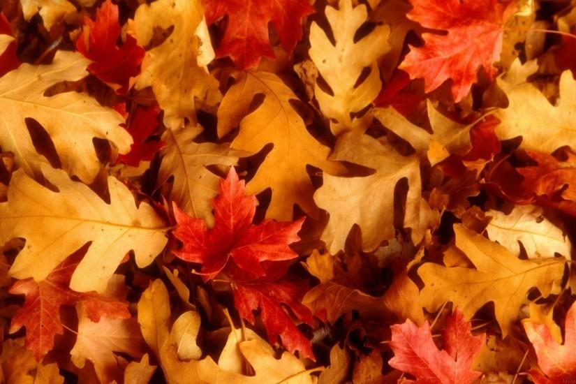 Wallpapers For > Autumn Leaves Desktop Background