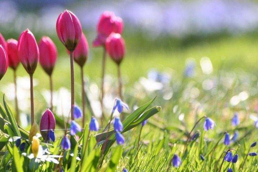 Spring Flowers Wallpapers & Pictures : Find best latest Spring Flowers  Wallpapers & Pictures in HD for your PC desktop background and mobile  phones.