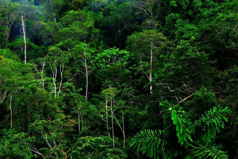 Awesome Free Rainforest HD Wallpaper Free Download