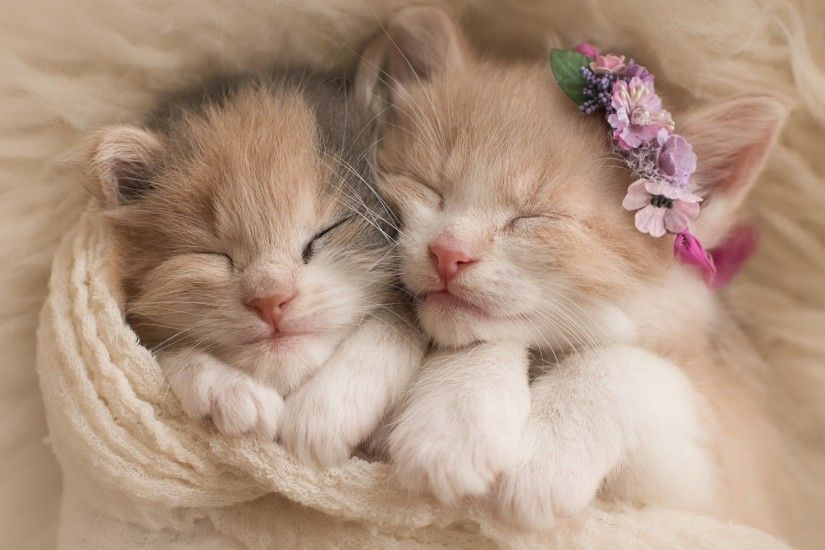 Cute kittens, Adorable, HD