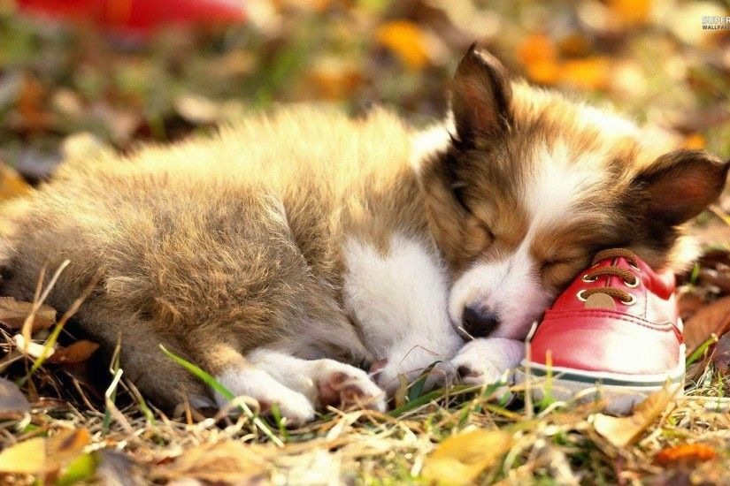 Puppies Wallpapers Puppies Wallpapers Backgrounds 1024×768