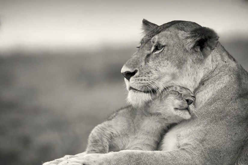 Download Wallpaper 1920x1080 Lioness, Lion, White, Animal, Family .