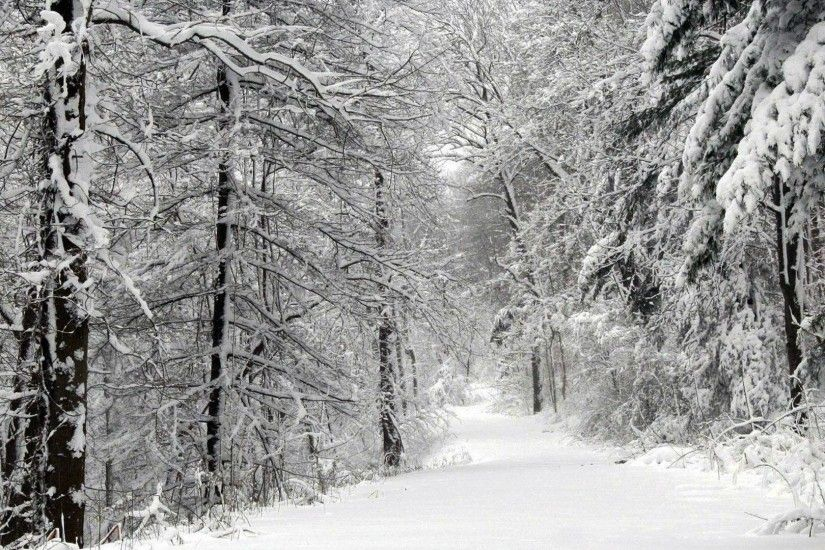 snowy-forest-wallpaper.jpg