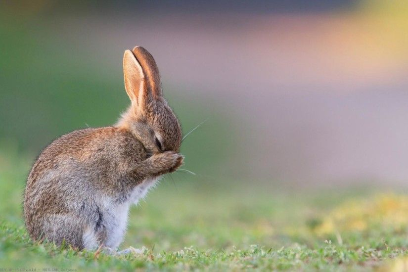 rabbit-grass-sadness-fear-1920x1080-wallpaper-wp60013631