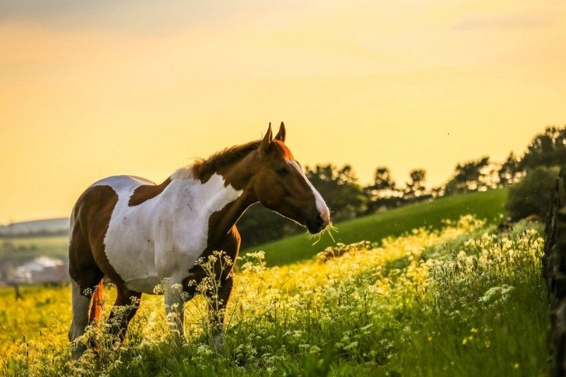 1920x1200 Paint Horses Wallpaper HD Resolution Horse In The World .