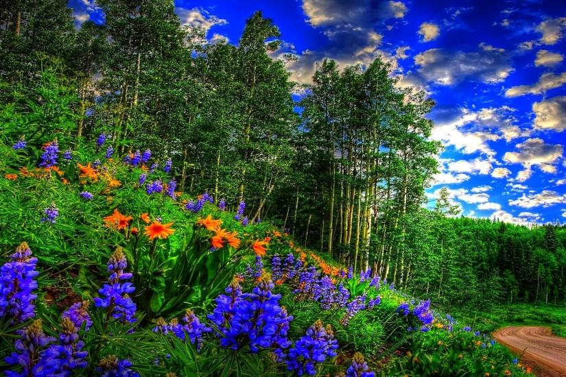 most popular spring background 1920x1200 download free