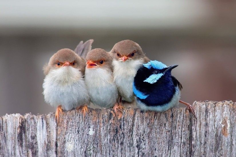 cute birds baby so sweet wallpaper